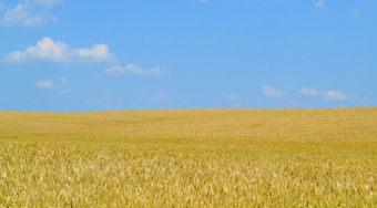 继瑞典巴西之后 乌克兰将开展区块链技术土地登记试点