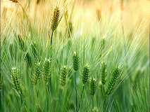 【期货资讯】3.27国内农产品期货:油脂、粕类、小麦及玉米价格行情