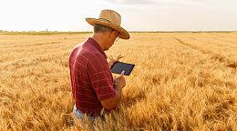 区块链技术运用于粮食领域:澳大利亚小麦种植者试用区块链销售粮食