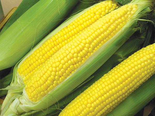 玉米价格上涨缘起美国闷热天气 大米及小麦期货价格齐涨