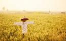 俄罗斯小麦出口量本季度或位列世界第一 全球变暖成助推因素