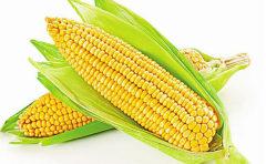 玉米产量问题悬而未决 下半年玉米价格是涨是跌?