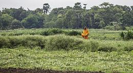 印度安得拉邦欲使用区块链打击土地产权欺诈