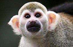新手必看:什么是猴市?