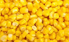 抛储临近玉米承压 玉米价格跌跌不休何时到头? 附今日各地玉米价格