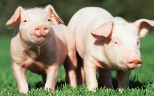 非洲猪瘟来了    区块链能让我们吃上放心肉吗?