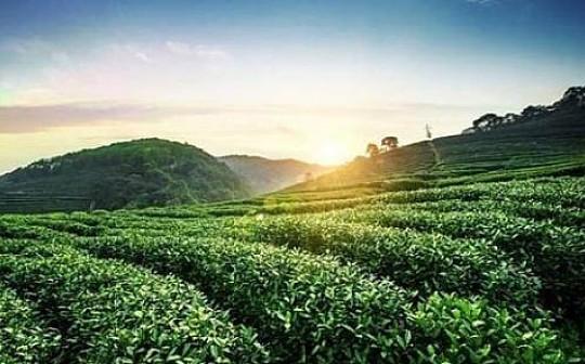 DLB数链将携手黔中生态茶交易中心   共同推进大数据的价值回归