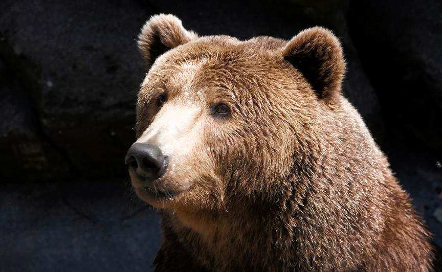 不要浪费这一次难得的熊市:带你认识HT