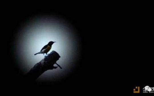 华雨欢:迎着光来的是黑暗、死而不僵的资金盘又回来了