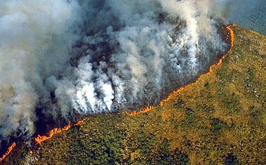 NoJoke | 美国雨林基金会出大招 区块链解决慈善透明问题