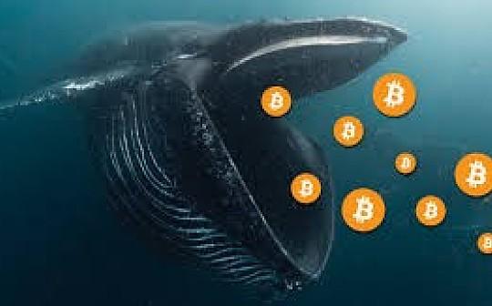 比特币巨鲸惊现  是否能挑战51%极限? | Fun Twitter