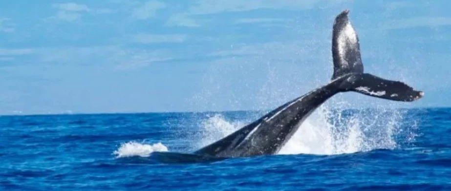 现在及将来 拥有多少枚比特币才算得上巨鲸