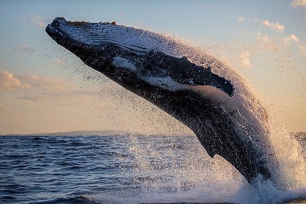"0.28BTC就能当比特币""巨鲸""?或许这一天会很快到来"