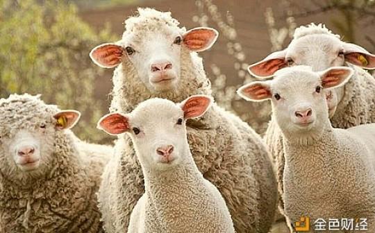 凶残羊毛党 有人躺赚几百万 有人亏掉一个交易所