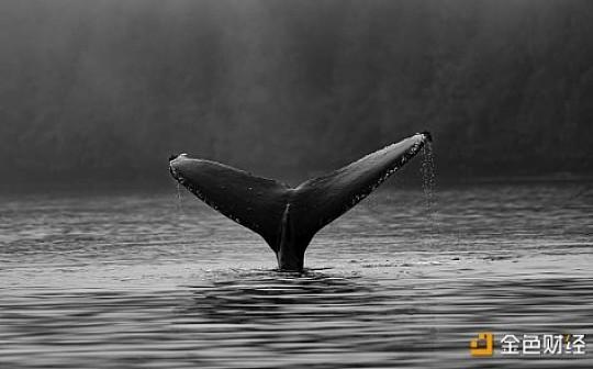 了解巨鲸灰度投资基金 洞悉加密市场风向