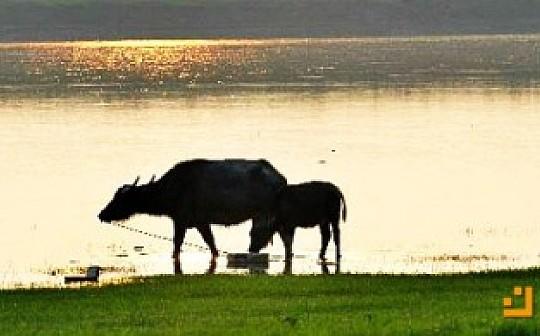 等待气势恢宏的长牛 并选择一条归隐之路