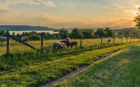 傳統和先進的完美結合:區塊鏈+農業將大有可為