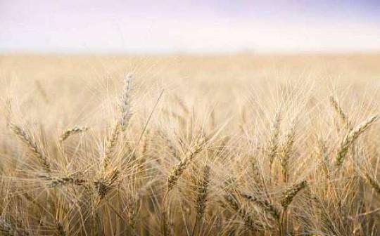 区块链如何为农作物生产与售卖带来新的机遇?-宏链财经