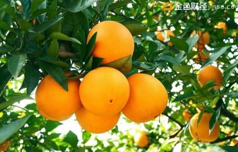 赣南脐橙也赶上了区块链的潮流