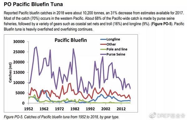 蓝鳍金枪鱼逐年数量统计 Cr:国际海鲜市场可持续性发展基金会