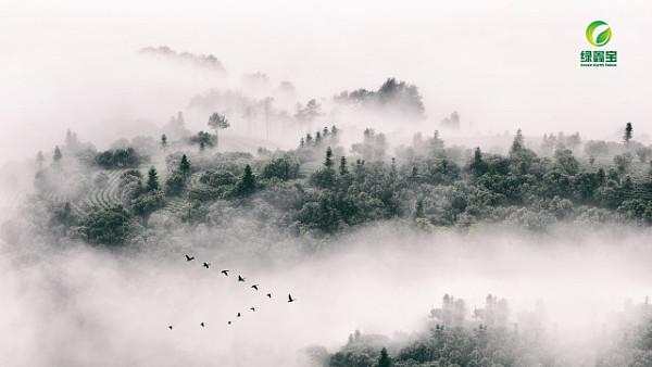 """绿鑫宝:用林业技术革新参与改变中国命运的""""伟大决战"""""""
