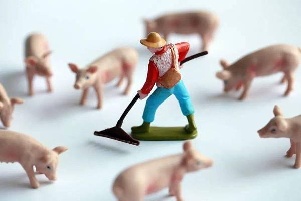 猪肉价格跌至去年最低水平 区块链养猪成热点