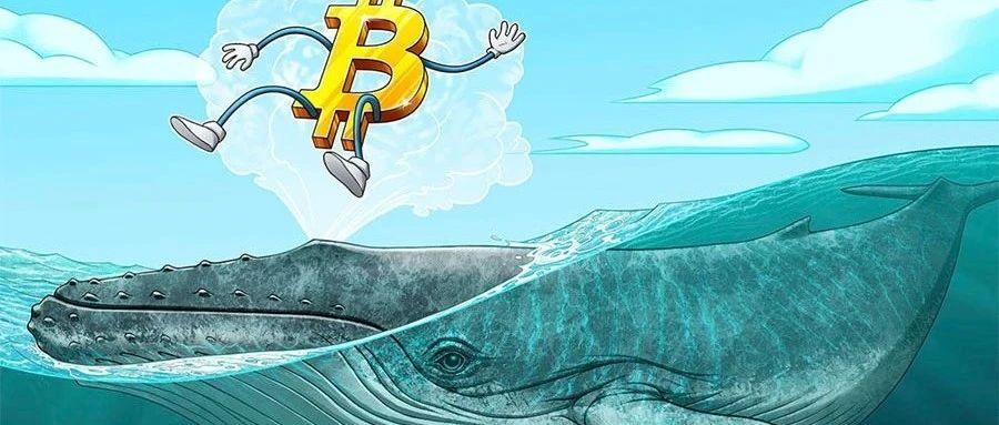 """""""百万富翁级""""巨鲸在过去25天内大揽9万个比特币"""
