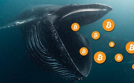 金色观察丨新的比特币巨鲸:他们来自哪里?
