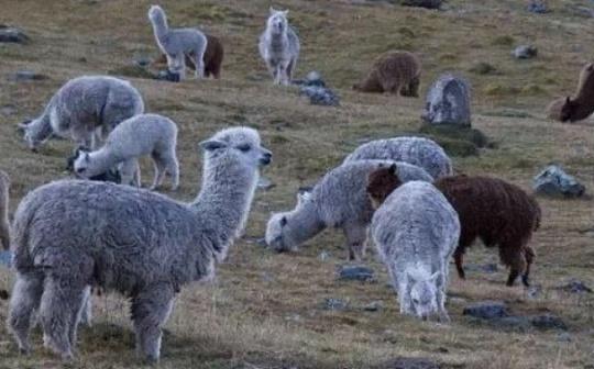 DeFi羊毛没薅着 你可能还搭上了自己的羊